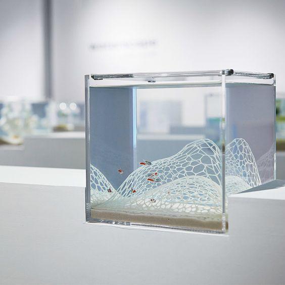 like underwater zen gardens, Haruka Misawa?s minimalist fish tanks ...