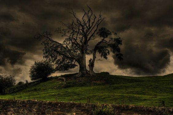 Fall ab, Herz vom Baum der Zeit, fallt, ihr Blätter, aus den erkalteten Ästen, die einst die Sonne umarmt', fallt, wie Tränen fallen aus dem geweiteten Aug! Und was bezeugt schon dein Herz? Zwischen gestern und morgen schwingt es, lautlos und fremd, und was es schlägt, ist schon längst sein Fall aus der Zeit....