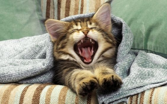Top 20 Funny Pictures of Cats | Amazing Photos