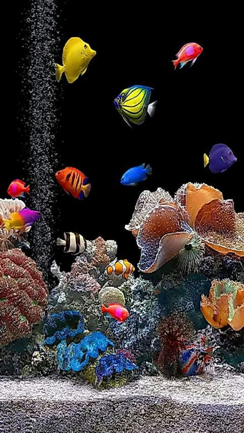 Beautiful Saltwater Aquarium