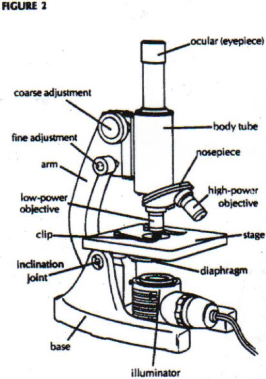 28 Collection Of Microscope Drawing 3d Microscope Parts And Use