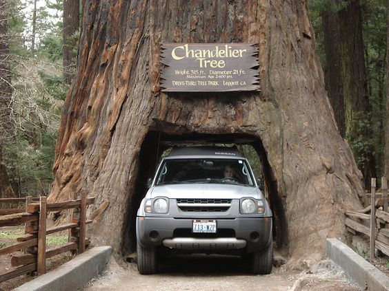 Kitschy Roadside Tourist Attractions in the California Redwoods – Northern California Tourist Attractions Map