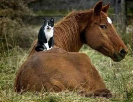 Amitiés insolites entre un Chat et un Cheval
