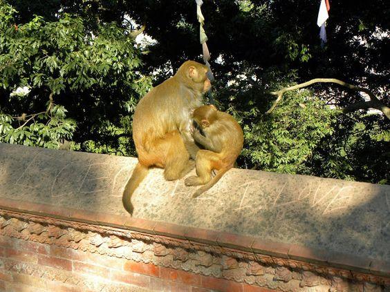 Swayambhunath Temple or Monkey Temple - Kathmandu, Nepal