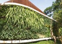 As paredes verdes são importantes para o meio ambiente