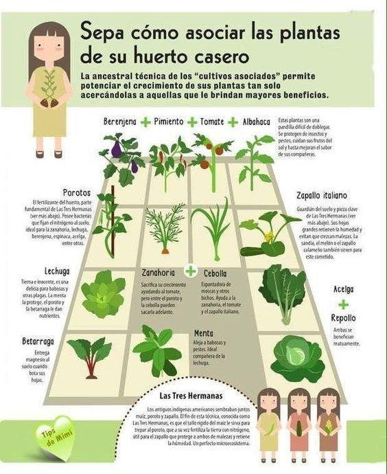 Sepa c mo asociar las plantas de su huerto casero la for Incompatibilidad en plantas