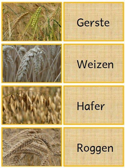 Sachunterricht in der Grundschule: Zuordnungskarten Getreide ...