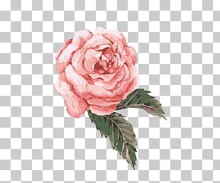 Flower Watercolor Painting Hand Painted Watercolor Flower Pink Pink Rose Png Clipart Watercolor Flowers Paintings Flower Illustration Watercolor Flowers