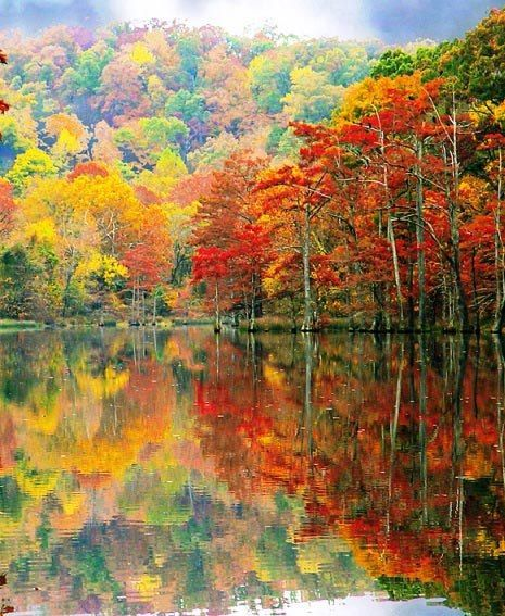 Fall travel in Oklahoma? Yes, you'll see gal color at Beavers Bend State Park in southeast Oklahoma | Carolyn Fletcher via TraveOK