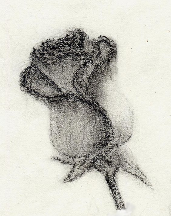 pencil drawing rose bleistiftzeichnung rose zeichnen pinterest. Black Bedroom Furniture Sets. Home Design Ideas