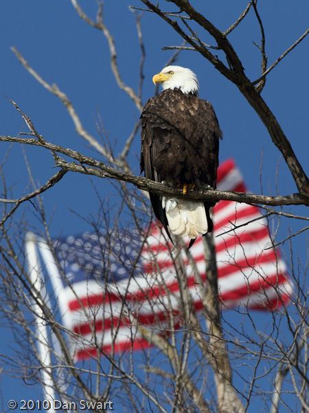 freedom-cool the Eagle just flew in the right spot at the right time.
