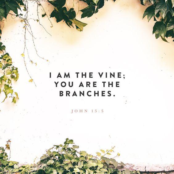 John 15:1-10 AMPC
