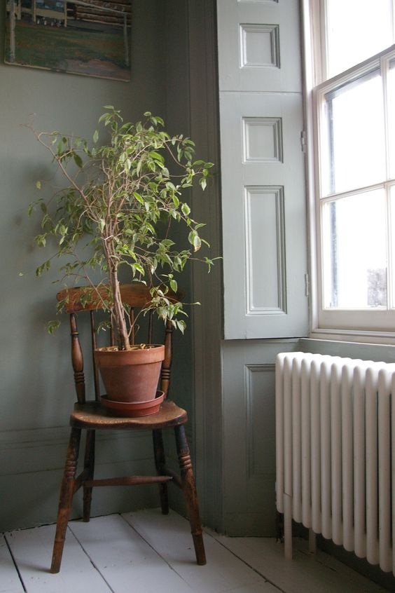 sash window, original shutters, lovely radiator...but someone water that plant!: