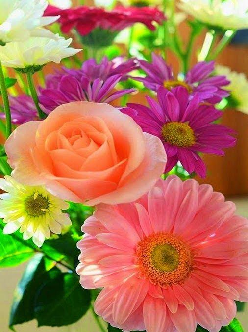 flores - Colecciones - Google+