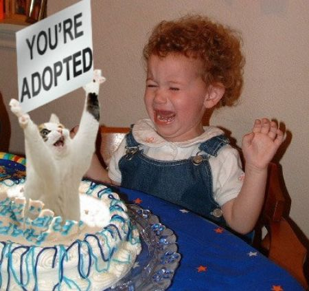 you're adopted birthday cake lol cat macro:
