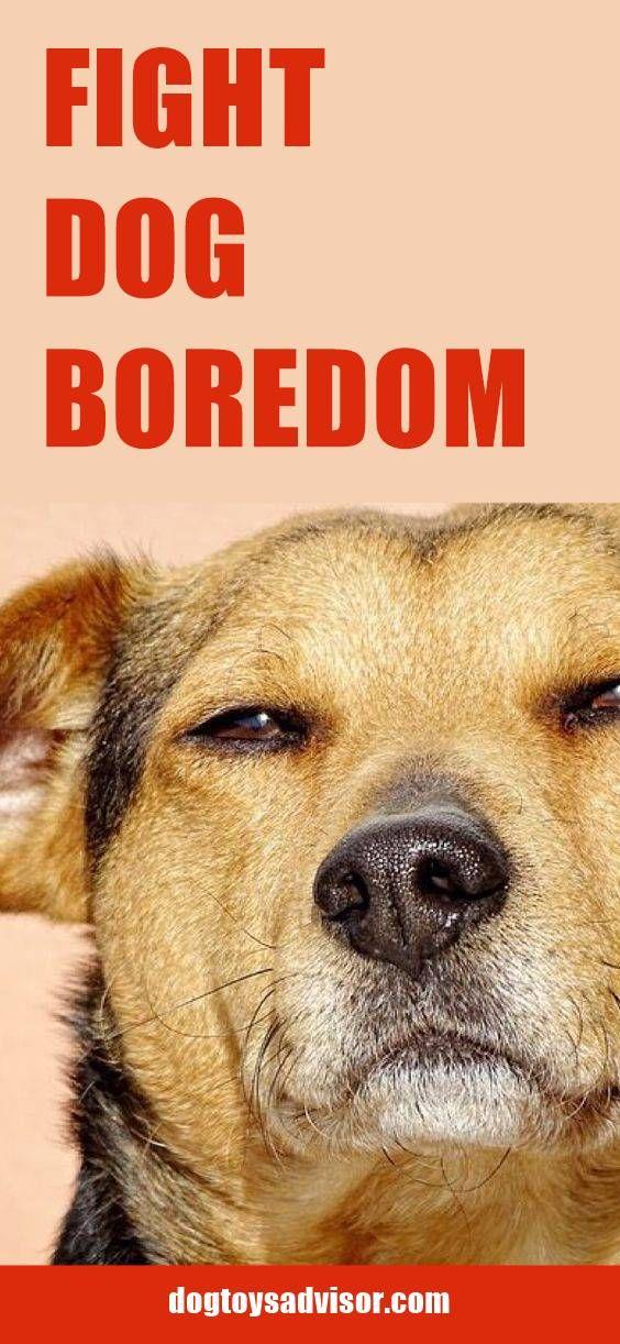 Pin By Traci Carlson On Doggy Fun Dog Boredom Hypoallergenic