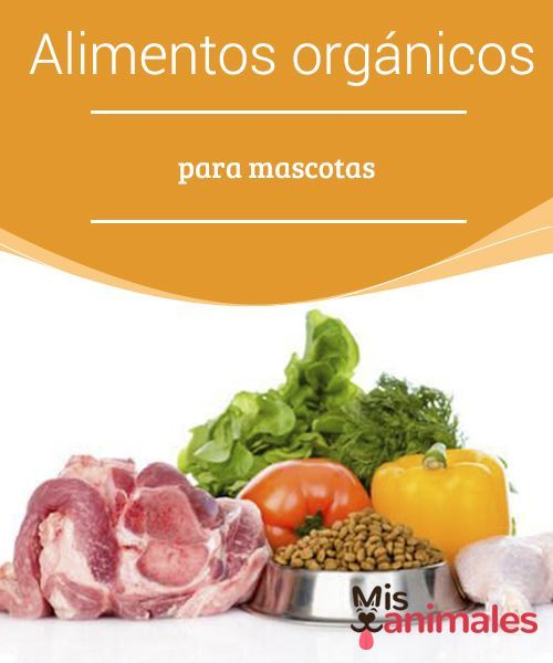 Alimentos Organicos Para Mascotas Mis Animales Recetas De Comida Para Perros Alimentos Organicos Alimentos Para Mascotas