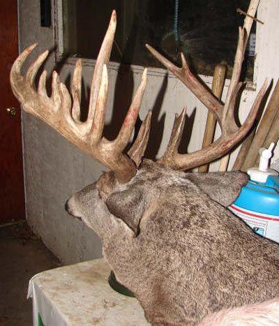 strange whitetail deer pics | Weird Bucks