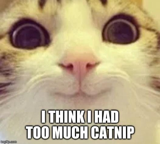 Top Laughing So Hard Cat Memes Cat Meme Queen Of France Cat Memes Cat Quotes Funny Funny Cat Memes