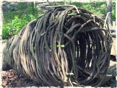 Survival Fishing – How to Make a Primitive Basket Fish Trap