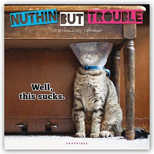 Grumpy Cat Calendar 2022.Amazon 10 Funny Cat Calendar 2021 2021 Oh How Unique Cat Calendar Funny Cats Cat Lovers