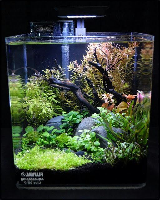 Tropical Aquarium Fish Tank Keep The Tank Away From Direct Sunlight Cold Breezes Or Vib In 2020 Fresh Water Fish Tank Fish Tank Design Aquarium Fish Tank