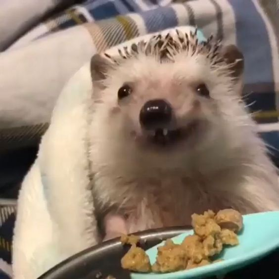 Happy Hedgehog  #Happy #hedgehog         Gallery [+25 Ideas]