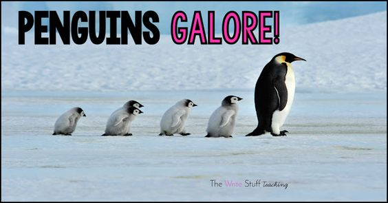 Penguins GALORE!