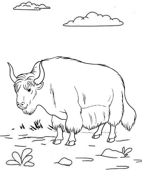 Pin By Cs Pengadaan On Yak Coloring Pages Animal Coloring Pages Coloring Pages Farm Coloring Pages
