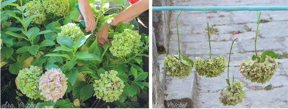 cortar-y-secar-flores-sracricket