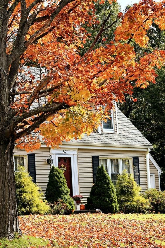 Awwww... The beauty of fall!