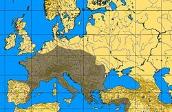 La Cultura Auriñaciense sustituyó a partir del 38000 antes del presente aproximadamente, a la cultura Musteriense y en otros lugares al Châtelperroniense, en el inicio del Paleolítico Superior. Se desarrolló a lo largo del final del Estadio Isotópico 3 (O.I.S. 3), alrededor de hace 40000 años.[citarequerida]