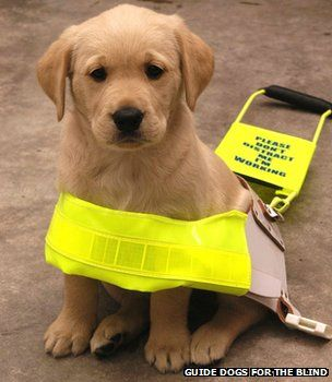Guide dog attacks  183 dog attacks between 30 May 2010 and 30 April 2012  Majority of victims qualified guide dogs (67.6%) with 56.8% working in harness at time of attack  Attacks resulted in injuries to people on 13.3% of occasions, although in 10 of these cases, attacks not reported to police  Victim dogs injured in 43.7% of incidents and required veterinary attention after 76.3% of the incidents.  Victims' working performance and/or behaviour reported affected after 43.2% of incidents