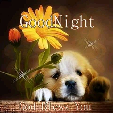 Good Night sister and all,have a restful sleep,God bless,xxx ❤❤❤✨✨✨