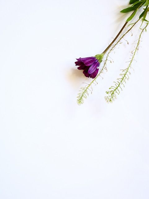 Free Image On Pixabay Write White Space Flatlay Flower Images Purple Flowers Flower Backgrounds
