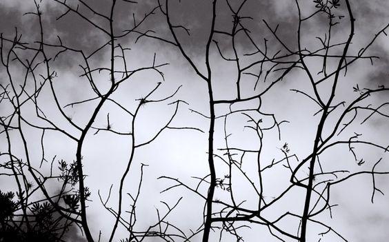Black White Siluet Tree Picture HD Wallpaper Desktop Background