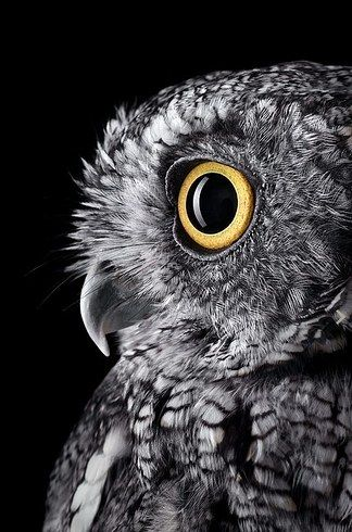 40 Breathtaking Portraits Capture The True Beauty Of Wildlife