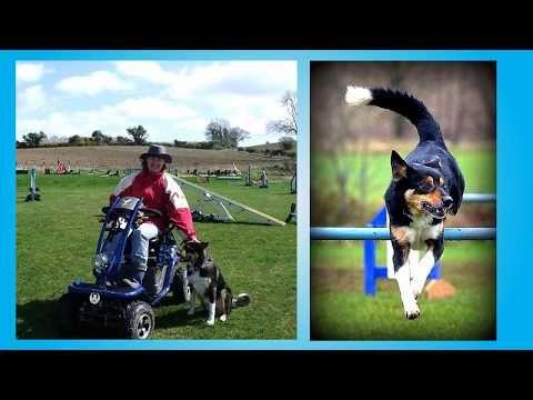 Ability For Agility Handling 360 Susan Garrett S Training