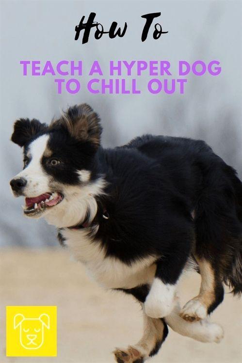 Mountain Dog Training John Meadows Dog Training Online