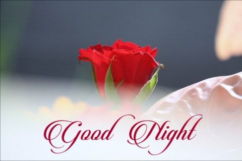 Cute Good Night Red Rose Good Night Wallpaper Good Night Image Good Night Flowers
