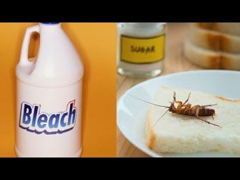 Get Rid Of Roaches By Using These 7 Proven Home Remedies Youtube Home Remedies For Roaches Fast Remedies Home Remedies