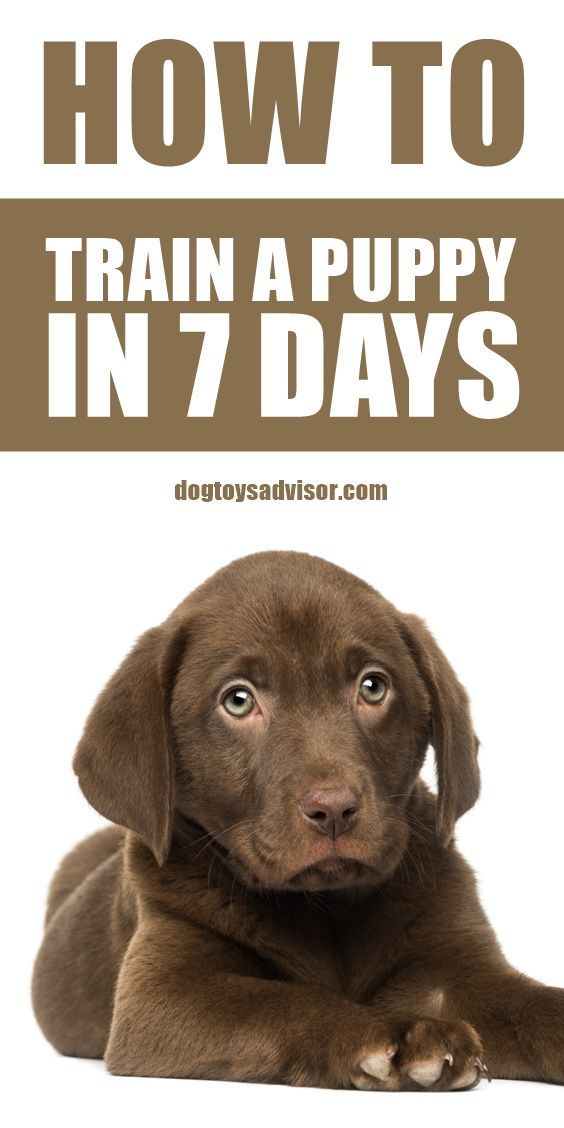 How To Housetrain A Puppy In 7 Days Puppies Puppy Training