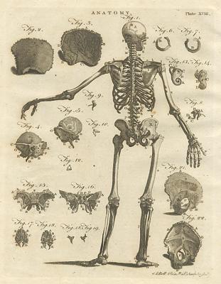 anatomy prints rule