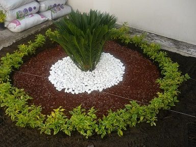 Dise o con palma cyca y duranta cubana accesorios piedras for Decoracion de patios con piedras y plantas