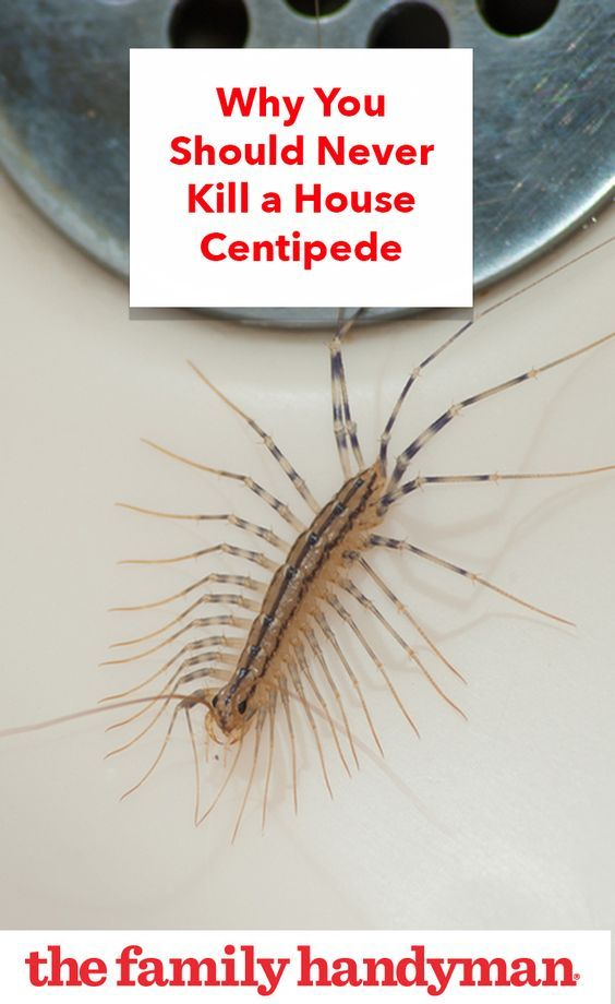 Here S Why You Should Never Kill A House Centipede Bathrooms Remodel Diy Bathroom Remodel Simple Bathroom Remodel