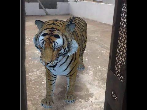 كيفية التصوير مع حيوانات ثلاثية الأبعاد View In 3d كيف أرى الحيوانات ثلاثية الأبعاد على Google تصوير مع حيو Arabic Alphabet For Kids Animals Alphabet For Kids