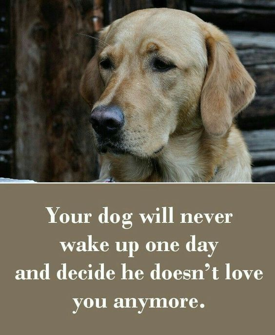 Pin By Leslie Giles Stander On All Things Dog Dog Quotes Dog