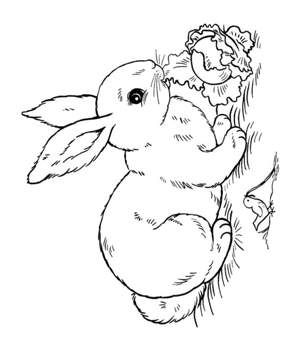 Bunny Rabbit Coloring Pages | This Easter Rabbit coloring page shows a bunny rabbit eating lettuce ...