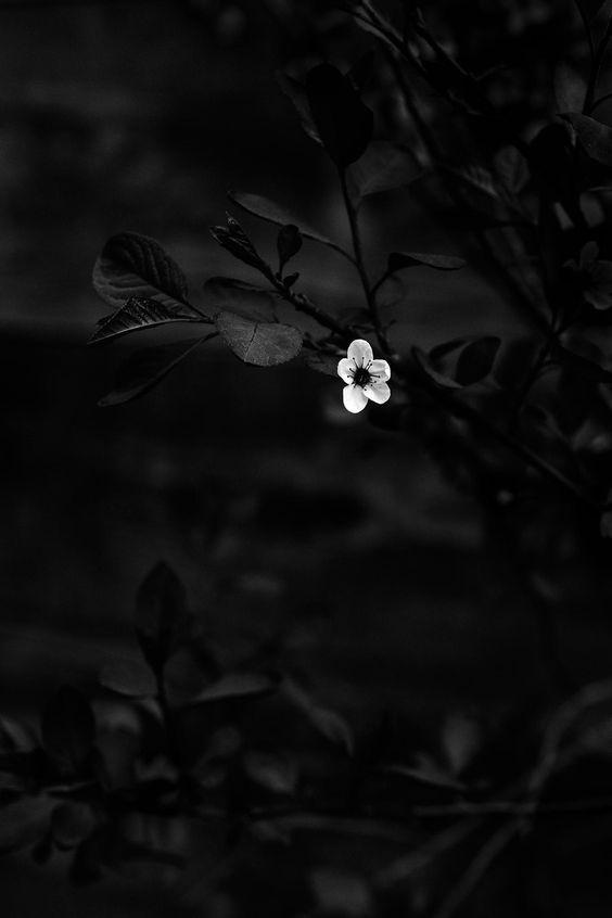 Epingle Par Eva Et Caetera Sur M En 2020 Photographie Florale Photo Noir Et Blanc Image Fond Ecran