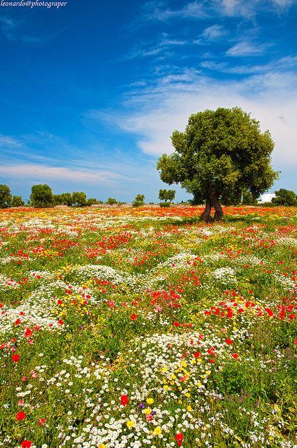 """Prati di Puglia, ovvero """"Primavera ad Altamura"""" - Puglia"""